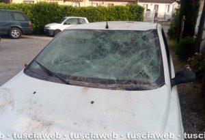Montefiascone – Scontro tra un'auto e un cinghiale