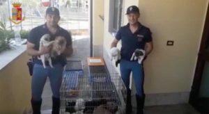 Arezzo - La polizia stradale con i cuccioli