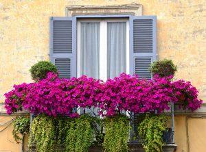 Ronciglione - Balcone in fiore