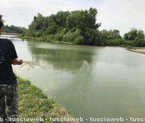 Pesca di frodo sul Fiora