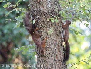 Due scoiattoli