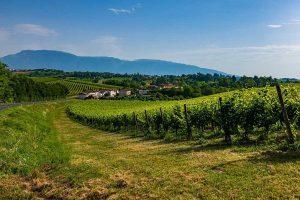Le colline del Prosecco nel Trevigiano