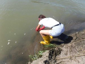 Legambiente - I rilevamenti di Goletta Verde