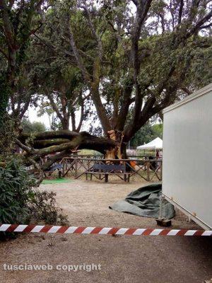 Vetralla - Albero caduto alla Villa