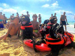 Trapani - I cani bagnino salvano tre bambini