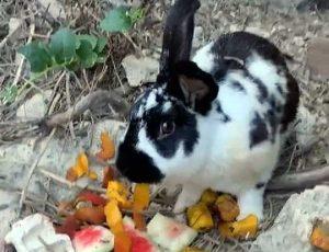 Ischia - Il coniglio lapidato