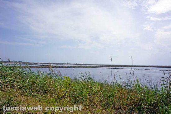 Tarquinia - Saline - La riserva naturale