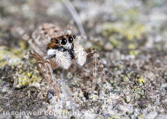 Un ragno - Foto di Pierluigi Manetti