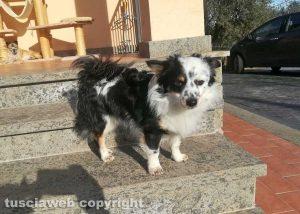 Animali - Il cane Mimmo