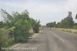 Monterosi - Alberi sulla corsia di sorpasso della Cassia bis