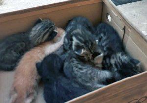 Civita Castellana - I gattini salvati dai vigili del fuoco