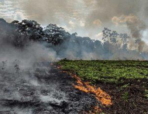 Brasile - Roghi in Amazzonia