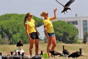 Orbetello - Gruppo di ibis eremita completa la migrazione dall'Austria - Foto di Alina Briciu