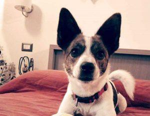 La cagnolina Magò