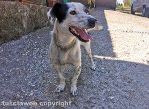 Animali - Cane ritrovato a Montefiascone