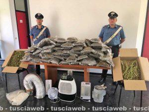 Orte - Carabinieri - Sequestrati 75 chili di droga