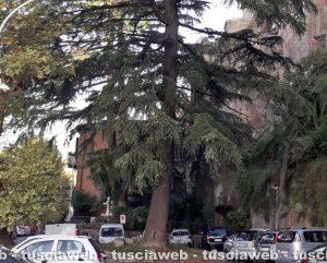 Orte - Il cedro al parcheggio di via Matteotti