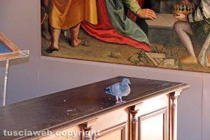 Viterbo - Comune - Il piccione nella sala della Madonna