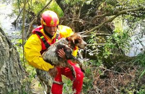 Caserta - Il cane recuperato nel fiume Volturno dai vigili del fuoco