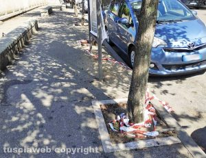 Viterbo - Le fettucce a piazza Crispi