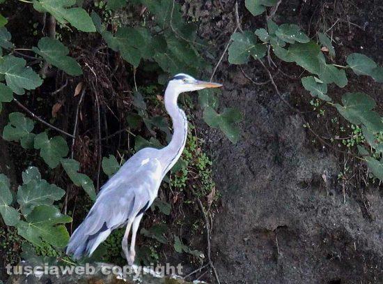 Capodimonte - Le bellezze della natura al lago di Bolsena