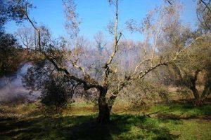 Montefiascone - Il frantoio di Pierluigi Presciuttini su Rai news 24