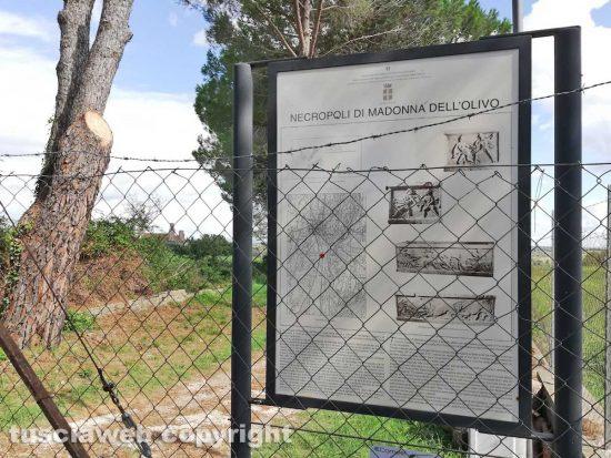 Tuscania - La necropoli della Madonna dell'Olivo