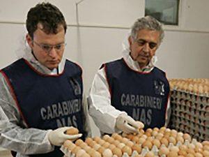 Controlli dei carabinieri del Nas sulla filiera delle uova