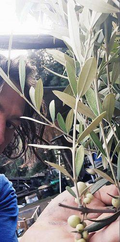 Civita Castellana - Alessio Grandicelli e l'oliva bianca