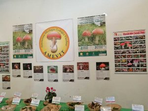 Viterbo - La mostra dell'aAssociazione micologica ecologica viterbese