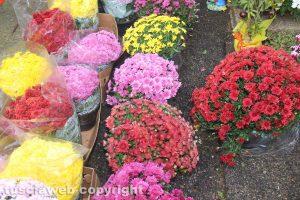 Viterbo - La vendita di fiori al cimitero di san Lazzaro Viterbo - La vendita di fiori al cimitero di san Lazzaro