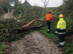 Maltempo - Albero caduto - La protezione civile di Piansano in azione