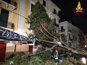 Maltempo - Albero crollato contro un'abitazione