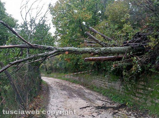 Viterbo - Strada Buon Respiro chiusa per la caduta di un albero