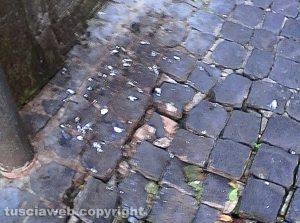 Montefiascone - Via Bixio piena di guano