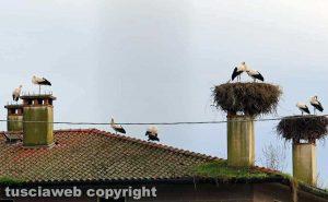 Fagagna, il paese delle cicogne