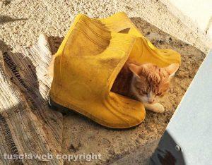 Romeo, il gatto con gli stivali