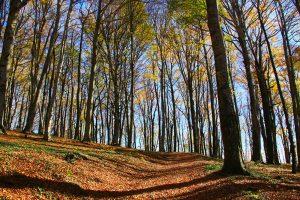 Caprarola - La faggeta del lago di Vico