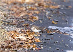 Bolsena - Uccello sul lago