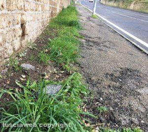 Viterbo - Erbacce sul marciapiede di via della Pila