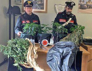 Ladispoli - Le piante di marijuana sequestrate
