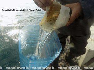 Tarquinia - Ripopolamento degli astici