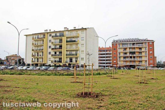 Viterbo - Il bosco urbano in via Consolini