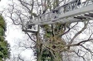 Montefiascone - I vigili del fuoco salvano un gatto bloccato su un albero