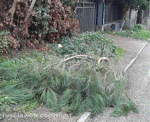Viterbo - Rami caduti al parcheggio di via delle Fortezze