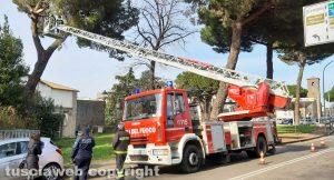 Viterbo - Rami caduti a via Armando Diaz - L'intervento dei vigili del fuoco