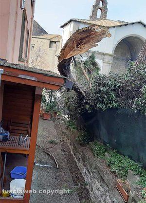 Viterbo - Rami caduti a via Armando Diaz