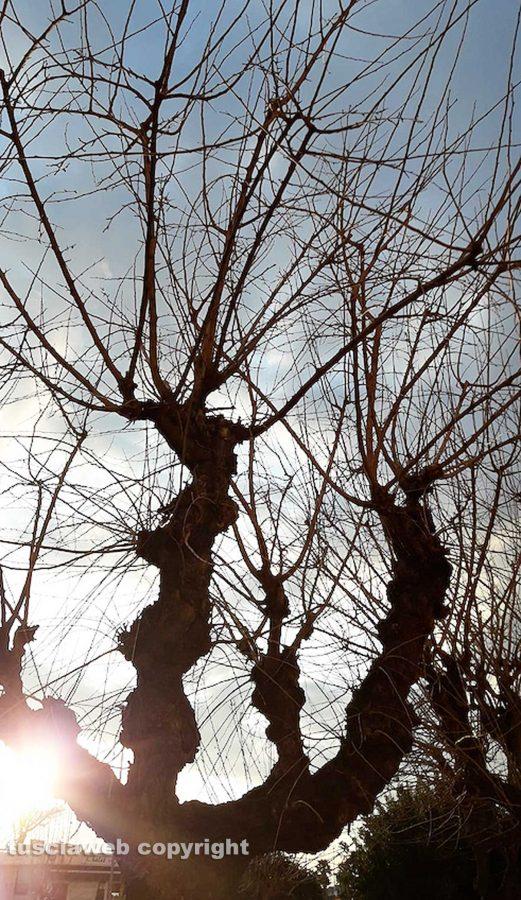 Luci d'inverno - Foto di Assunta Ricci