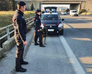 I controlli dei carabinieri dell'unità cinofila
