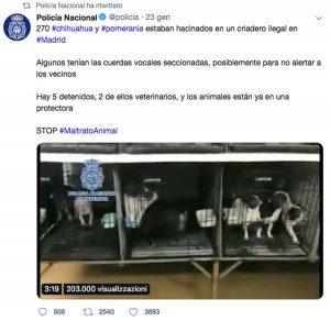 La polizia spagnola libera centinaia di cagnolini